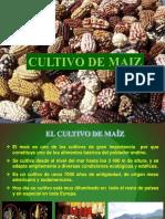 Cultivo de Maiz 2015_1 Enviar