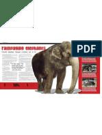 Kluge Elephant