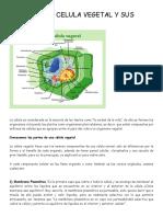 Partes de La Celula Vegetal y Sus Funciones