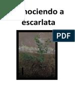 Informe Del Proceso de Crecimiento de La Planta Limonero Part 3