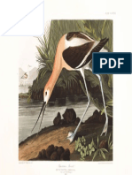 Plate-318-American-Avocet.pdf