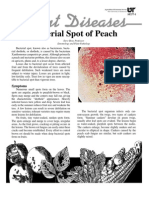 Bacterial Spot of Peach