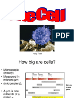 Powerpoint Cell Theory