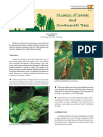 Diseases of Shade and Ornamental Trees