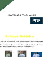 Pasos Conversion Del Opio en Morfina y Heroina