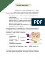 sistemas Sensoriales (Anatomía)