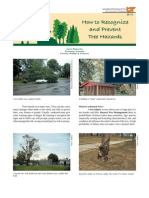 How to Recognize and Prevent Tree Hazards