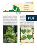 Nutrient Deficiencies in Trees
