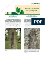 Bacterial Wetwood Disease of Trees