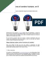 Cómo Funciona El Cerebro Humano