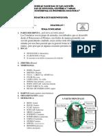 CONULLARIAS- BRAQUEOPODOS-ESPONNJAS