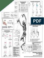 ortho-essentials1.pdf