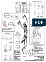 orthopaedics classification.pdf