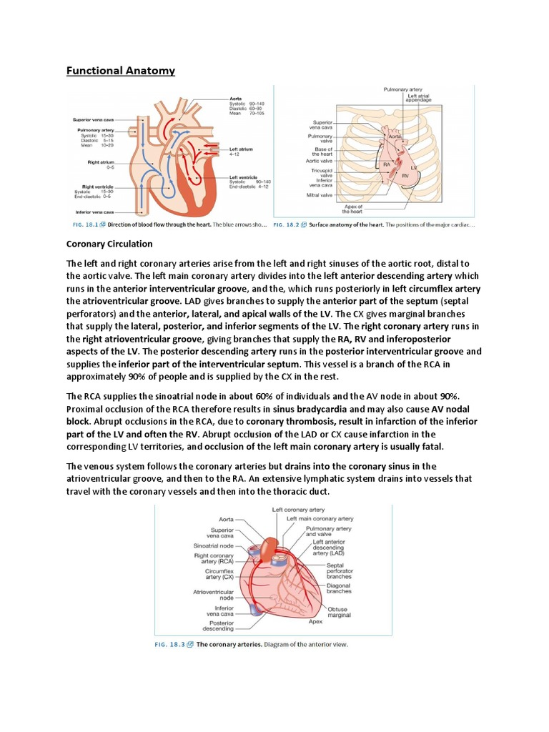 Functional Anatomy | Coronary Circulation | Heart