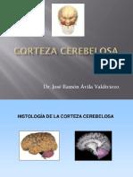 Corteza Cerebelosa