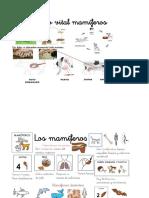 Animales, ciclos y habitat.docx