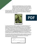 PIPERINA(marco teorico +conclusiones)