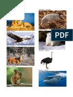Animales Salvajes y Domesticos en Ingles y Español