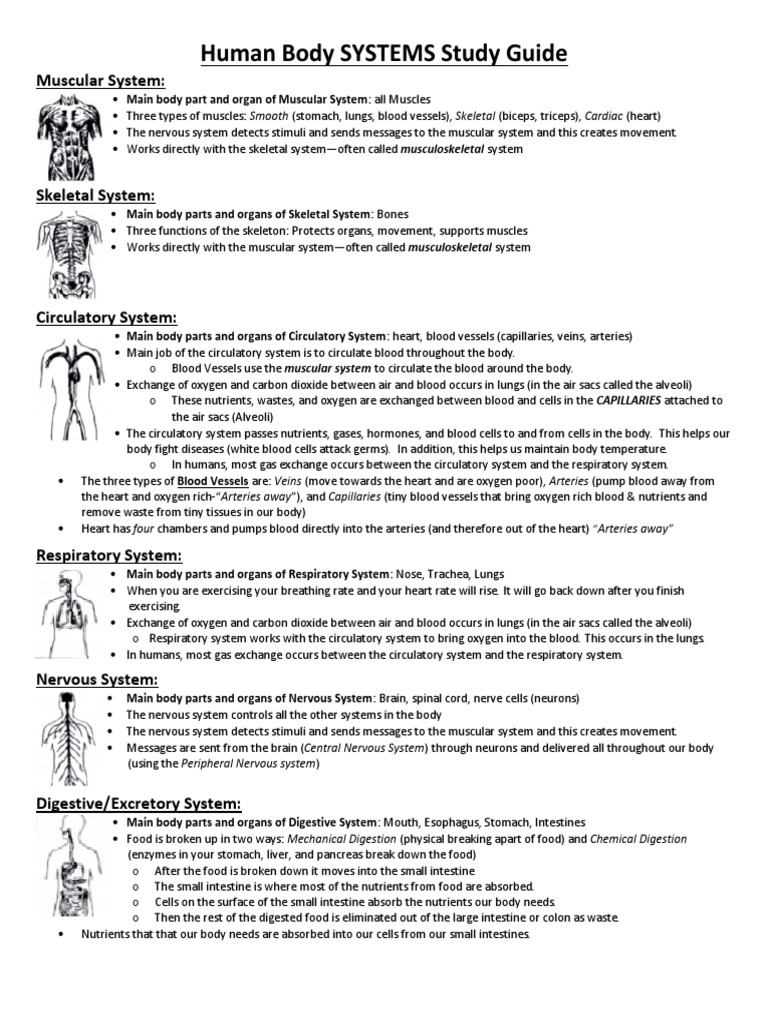 Muscular System Study Guide - Practice Test Questions ...