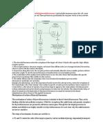 Mechanism of Action of Thyroid Hormone