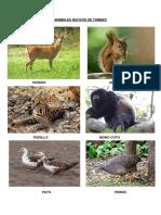 Animales Nativos de Tumbes