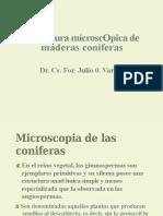 Estructura Micróscopica de Coníferas