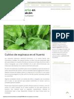 Cultivo de Espinaca en El Huerto I Un Huerto en Mi Balcón