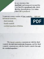Neuroanatomia Part 2