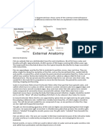 External Fish Anatomy