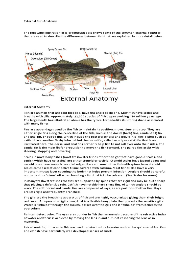 External Fish Anatomy | Peces | Digestión