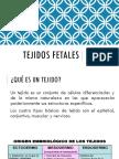 TEJIDOS FETALES
