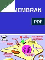 2 Biomembran Dan Organel