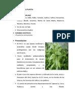 paico plantas medicinales