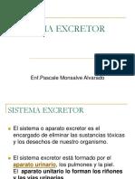 Sistema Excretor (1)