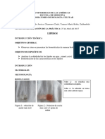 Biologia Info 1