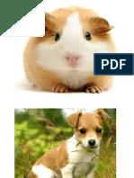 animal  for printing