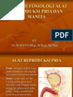 Anatomi Fosiologi Alat Reproduksi Wanita