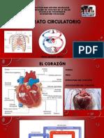 Aparato Circulatorio.pptx