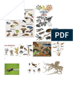 Taxonomia Ciencias 50 Dibujos de Biologia