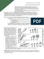 alometria (1)