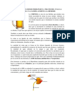 Cuál Es El Mecanismo Fisiológico a Traves Del Cual La Cerveza y La Sandía Aumenta La Diuresis