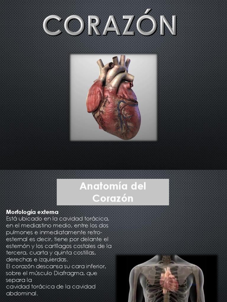 Dorable Cuál Es La Anatomía Externa Foto - Imágenes de Anatomía ...