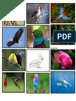 Mamiferlos, Aves, Peces, Insectos, Reptiles y Domesticos