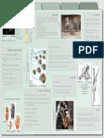 Características principales de los primates