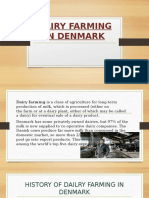 Dairy Farming in Denmark