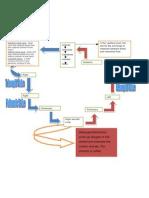Cardiopulmonary Circulation