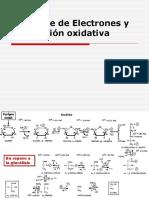 Transporte de Electrones y Fosforilación Oxidativa.ppt
