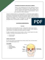 Estudo Radiográfico Do Esqueleto Axial Crânio e Face