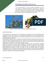 ...Produção de Azeite de Oliva..