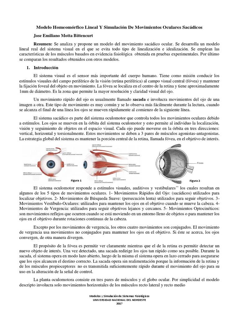 Modelo Homeomórfico Lineal Real 2017